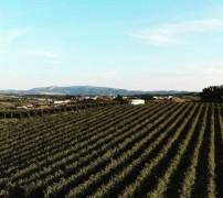 Portugal EasyCamp_Sanguinhal